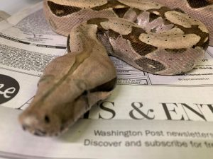 reptile photography tips