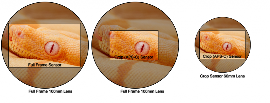 Crop sensor vs full frame sensor macro photography